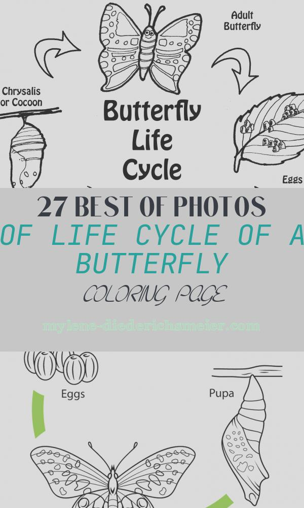 Life Cycle Of A butterfly Coloring Page Fresh butterfly Life Cycle Printable