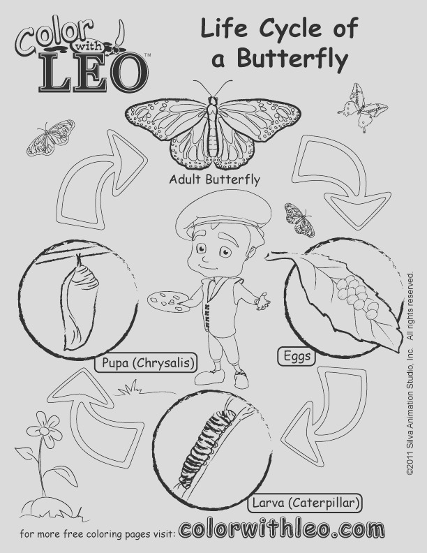 butterfly life cycle coloring pages 10