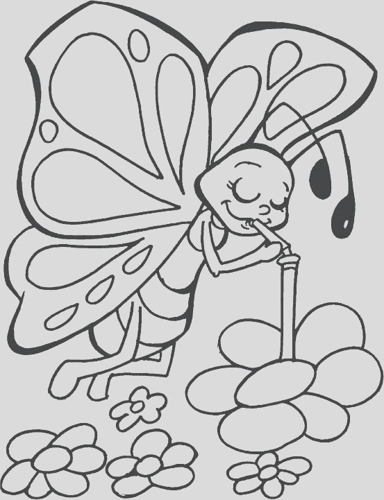 butterflies life cycle coloring pages children
