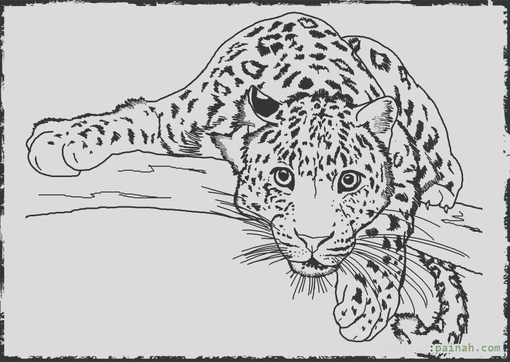 realistic wild animal coloring pages