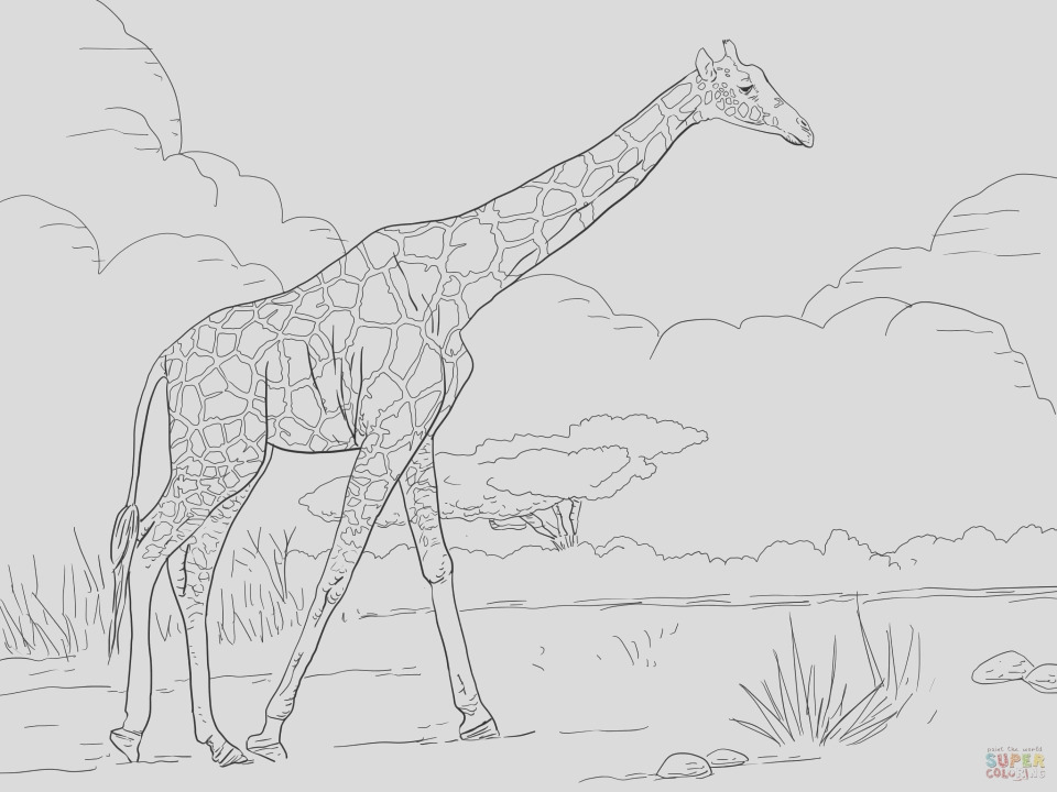 giraffe coloring pages realistic animals