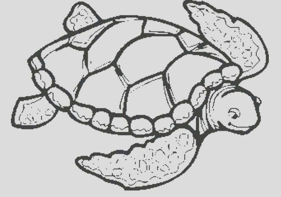 sea turtle drawing color