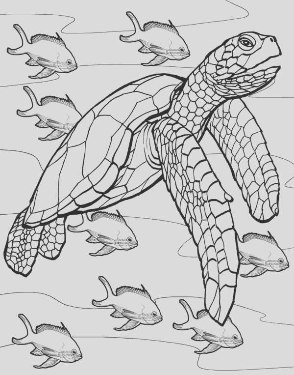 the jurney of sea turtle free coloring page