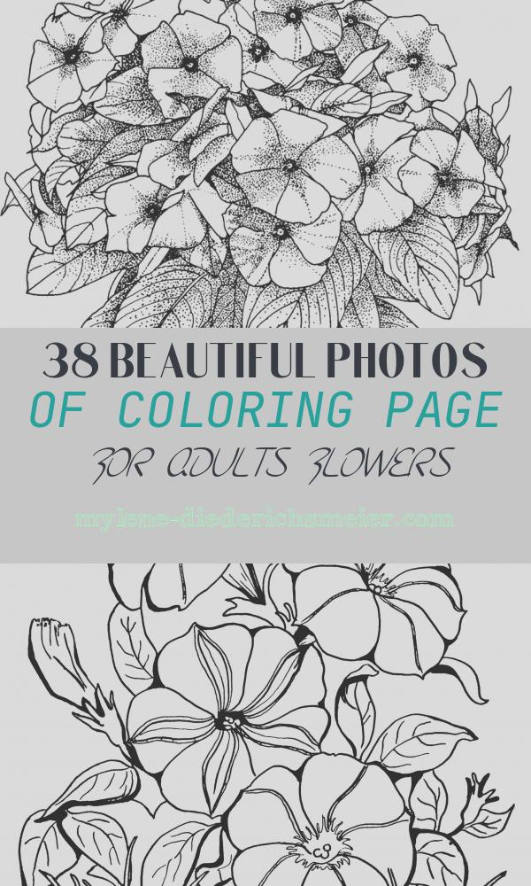 Coloring Page for Adults Flowers New Flower Coloring Pages for Adults Best Coloring Pages for