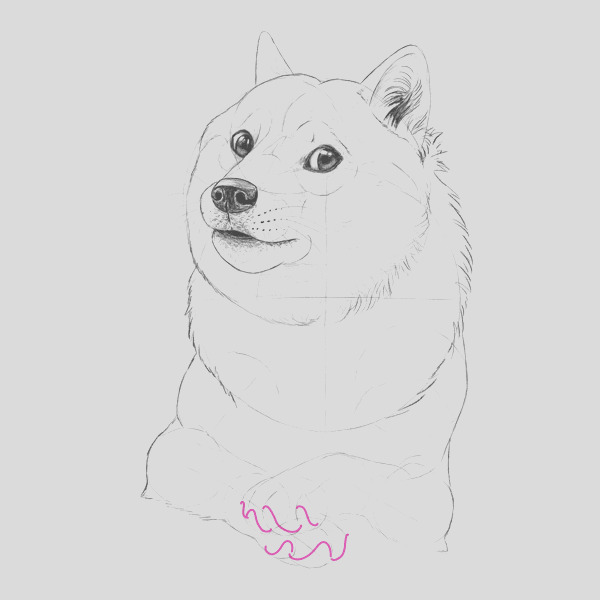 such tutorial many fun how to draw doge cms