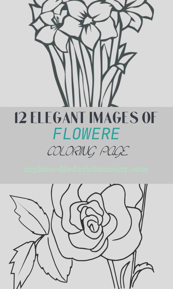 Flowere Coloring Page New Free Tropical Flower Drawings Download Free Clip Art