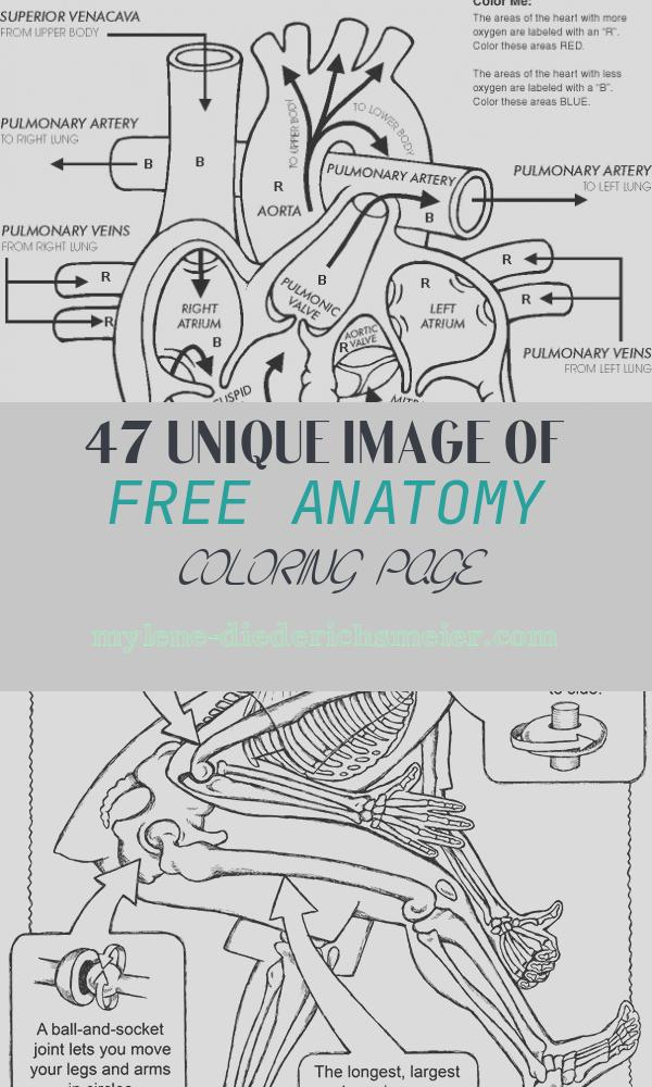 Free Anatomy Coloring Page Awesome Free Printable Human Anatomy Coloring Pages 2