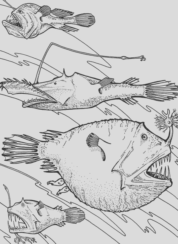 angler fish is deep sea fish coloring pages