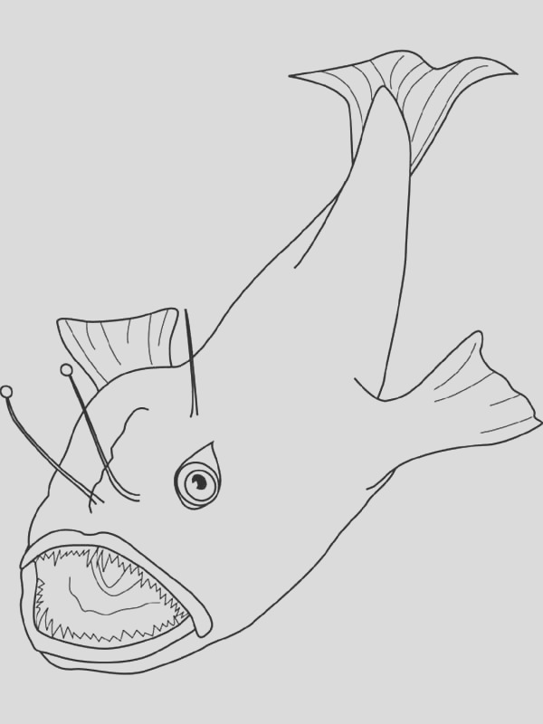 angler fish catching prey coloring pages