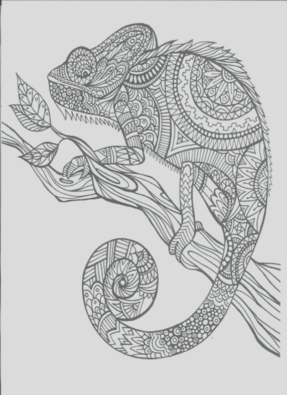 adult coloring blanks