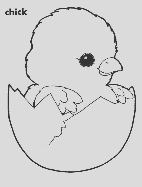 adorable chick hatching coloring pages