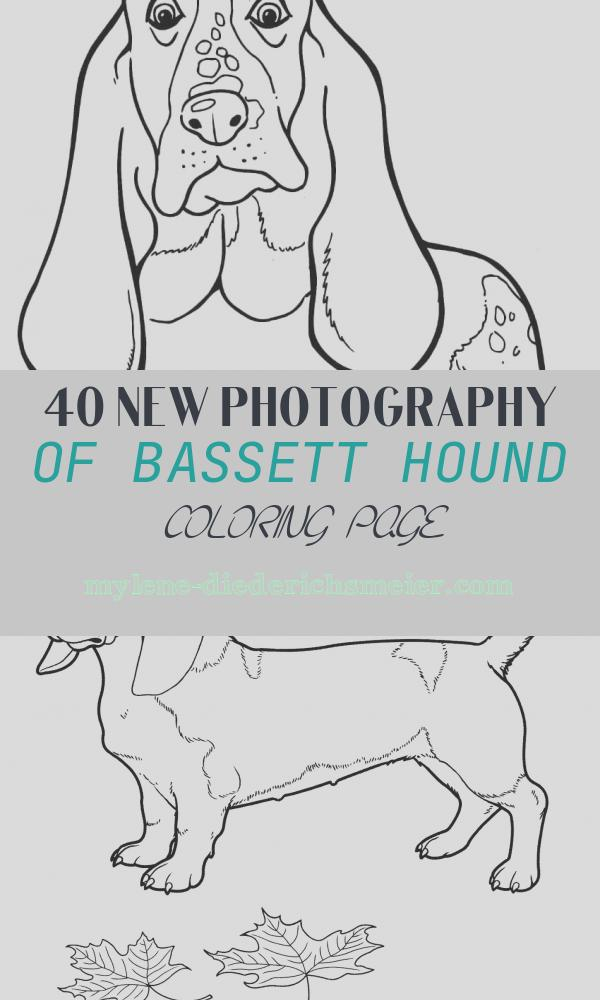 Bassett Hound Coloring Page Unique Basset Hound Coloring Page