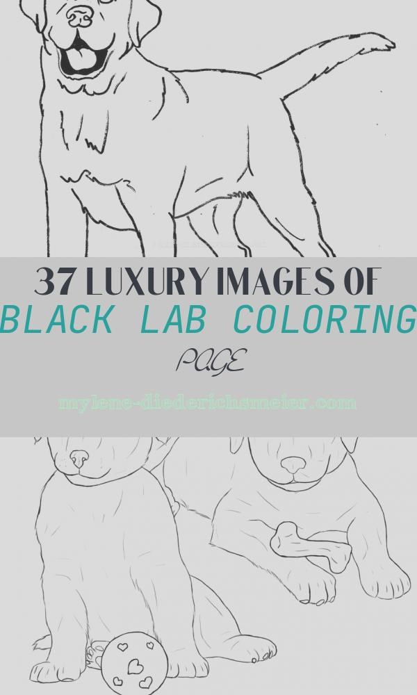 Black Lab Coloring Page Luxury Black Lab Coloring Pages Sketch Coloring Page