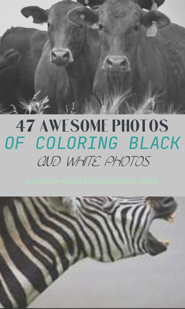 Coloring Black and White Photos Beautiful Colorize Black and White S – Algorithmia