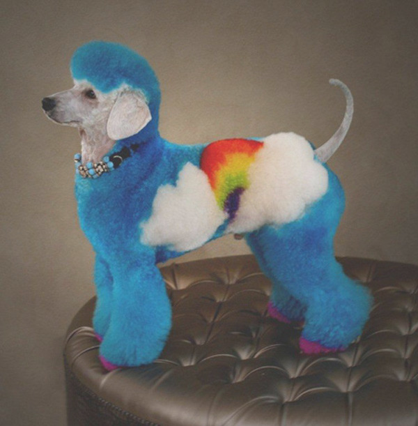 purebred breeders dyepaint your dogs