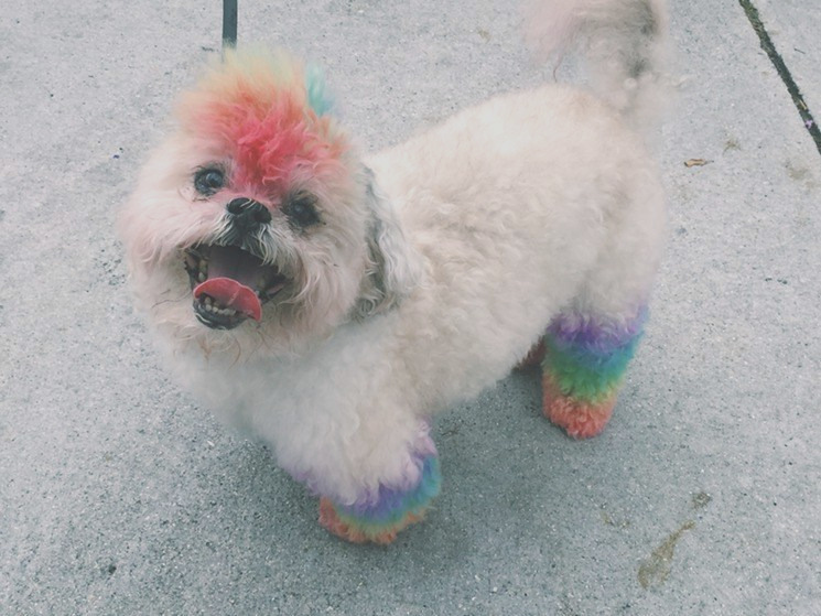 pet hair color to dye for