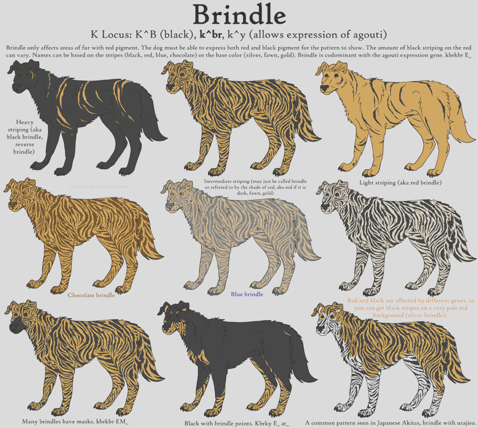 Dog Colors Guide Brindle