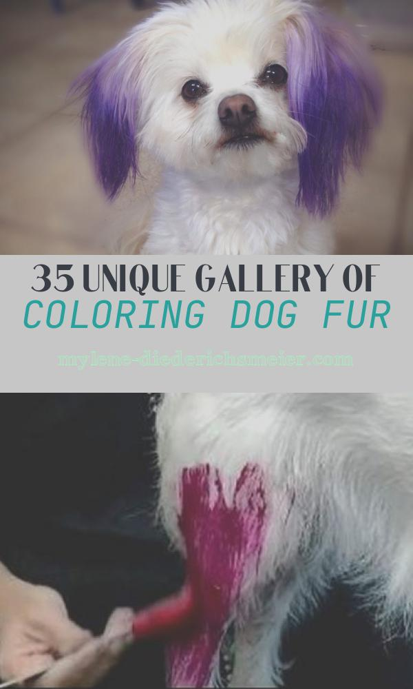 Coloring Dog Fur Luxury I Dyed Marilyn S Ears with Purple Food Coloring Not Hair