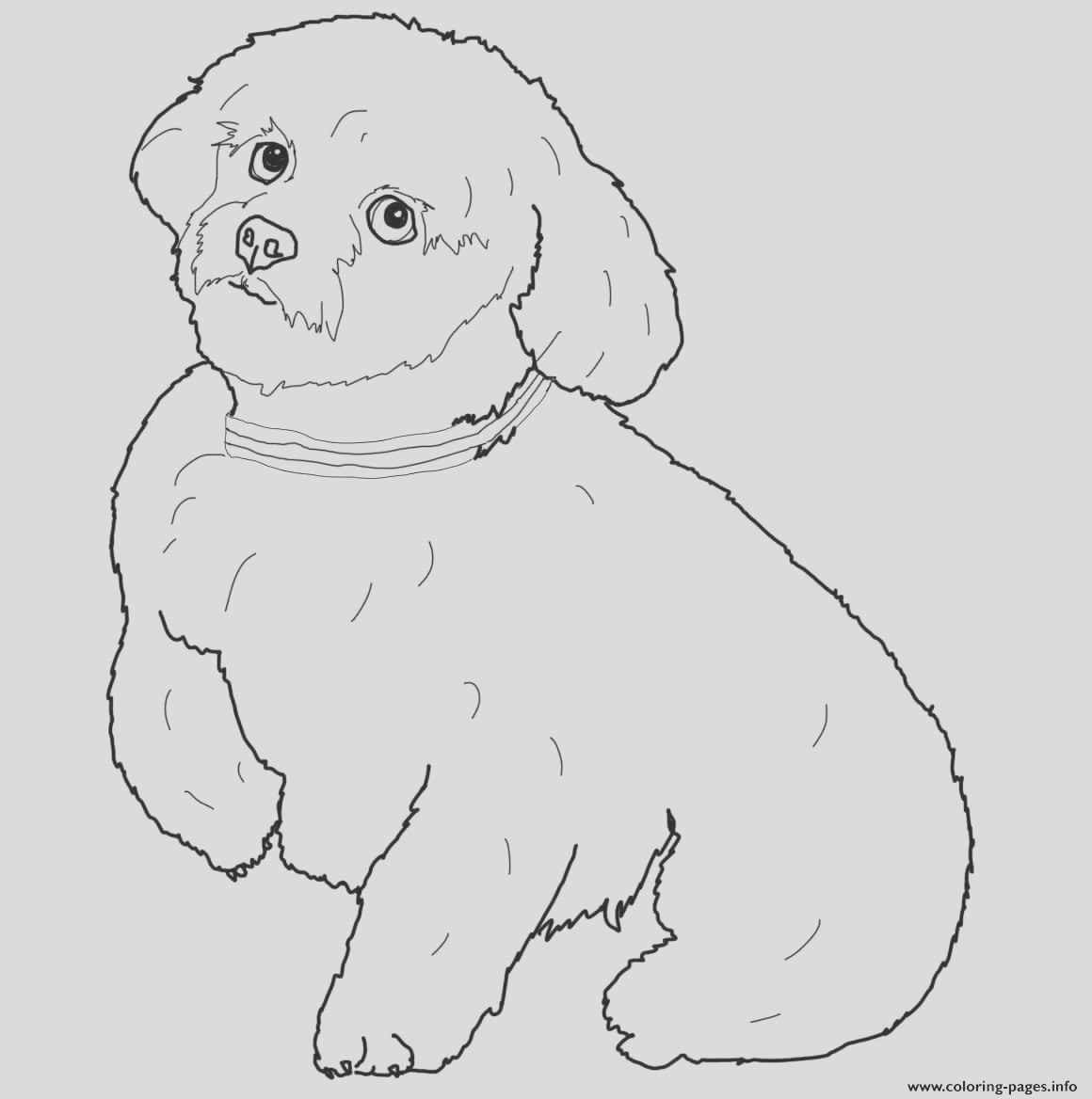 short hair maltese dog printable coloring pages book