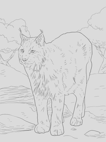 coloring pages medium