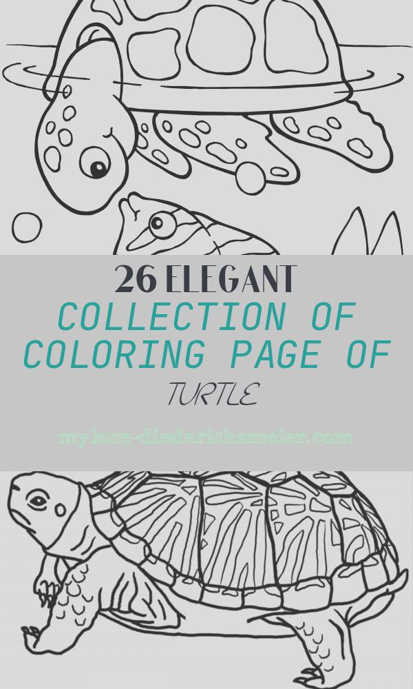 Coloring Page Of Turtle Beautiful Print Coloring Image