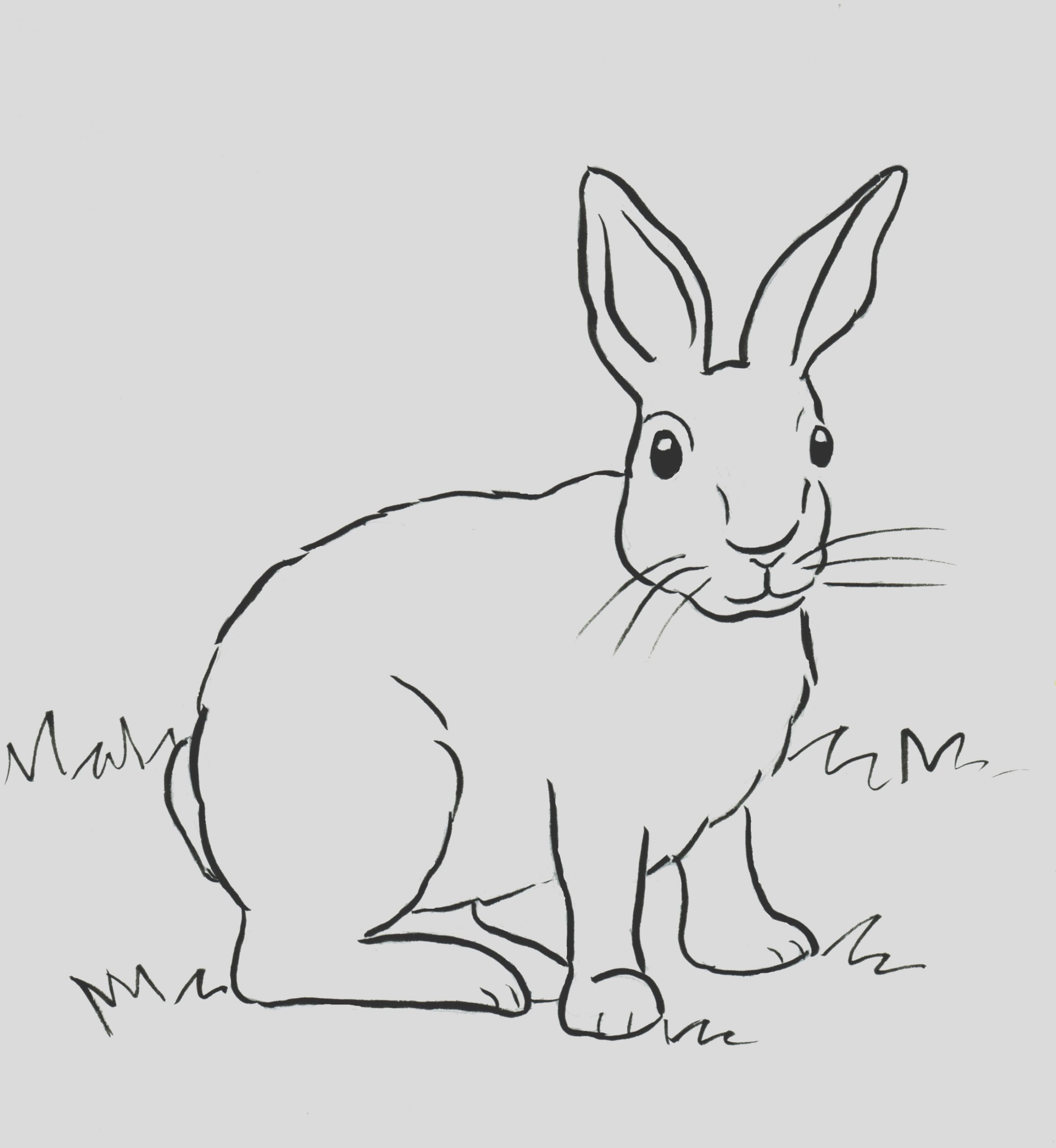cottontail rabbit coloring page