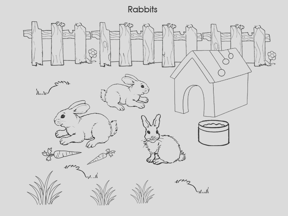 pet colouring pages rabbits