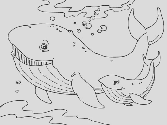 free sea animals coloring pages