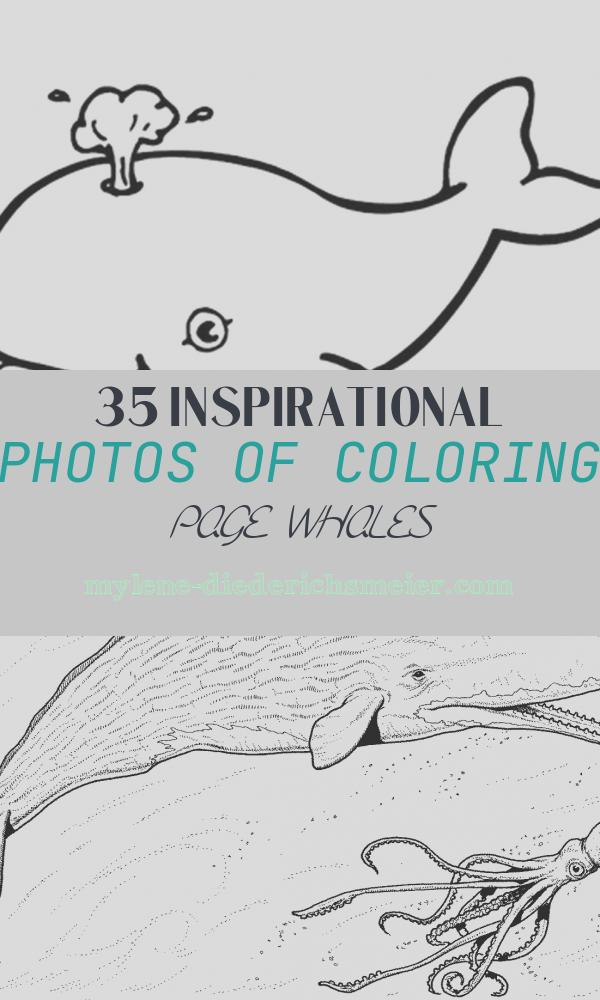 Coloring Page Whales Unique Free Printable Whale Coloring Pages for Kids
