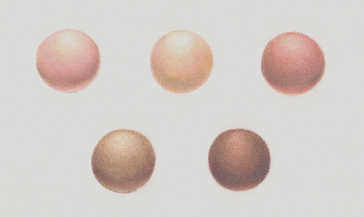 how to create lifelike skin tones with colored pencils
