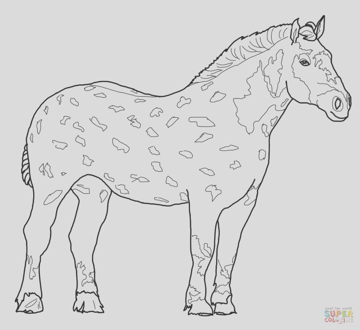 detailed horse drawing