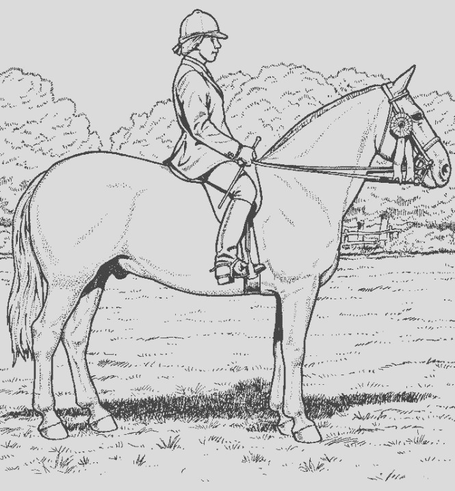 detailed horse coloring pages page for kids