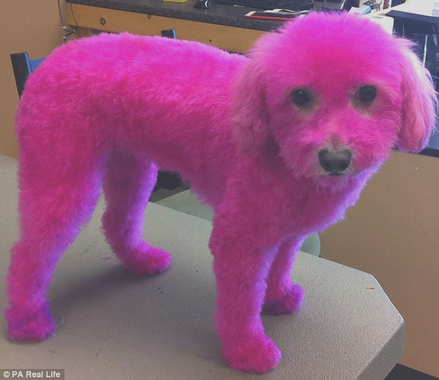 Canadian woman defends dyeing dogs fur