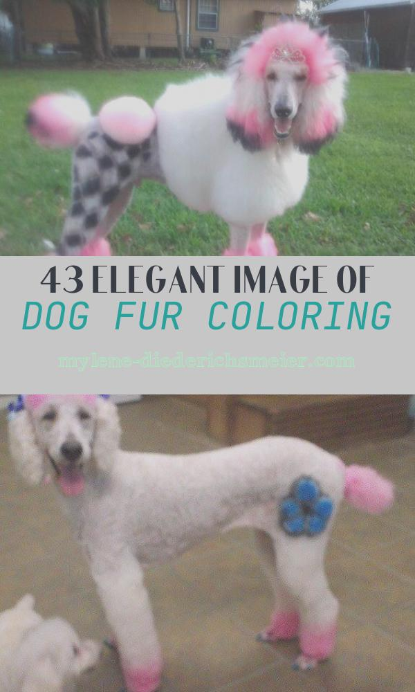 Dog Fur Coloring Fresh Critter Color Temporary Fur Coloring for Dog Coats