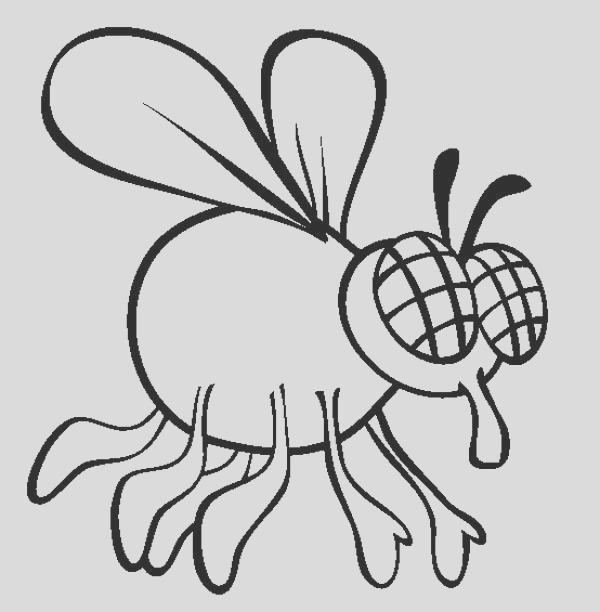 how to draw fly coloring page