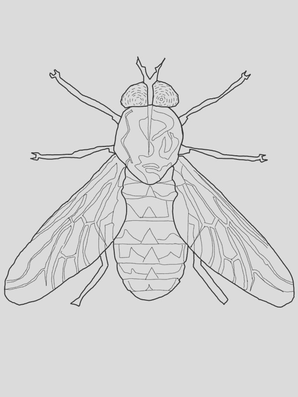 fly coloring page for kids