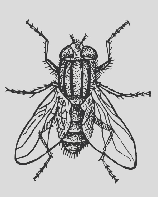 hairy fly coloring page