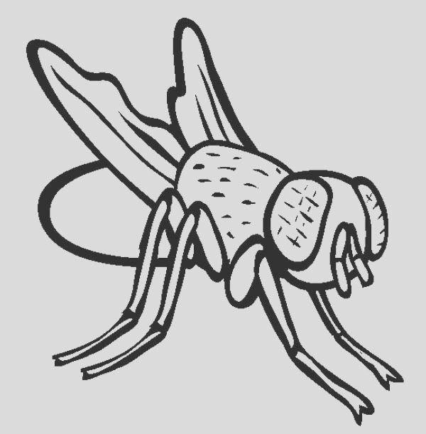 disgusting fly coloring page