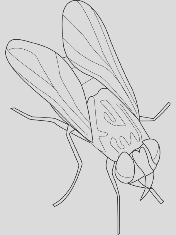 animal kingdom fly insect coloring page