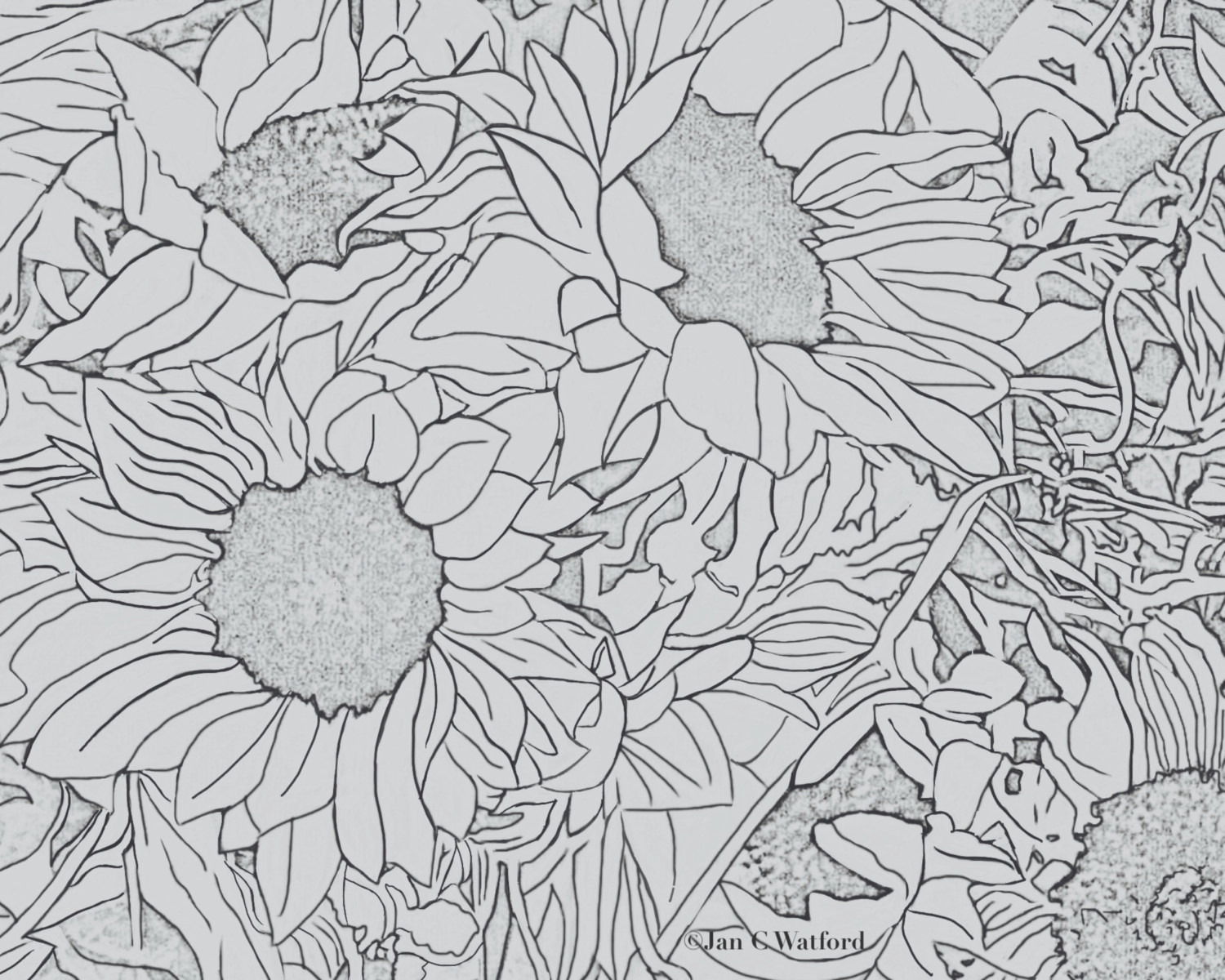 sunflowers 1 adult coloring pages