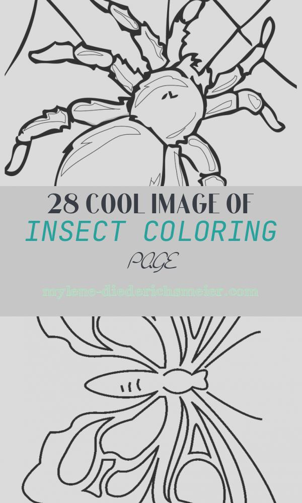 Insect Coloring Page Beautiful Realistic Insect Coloring Pages