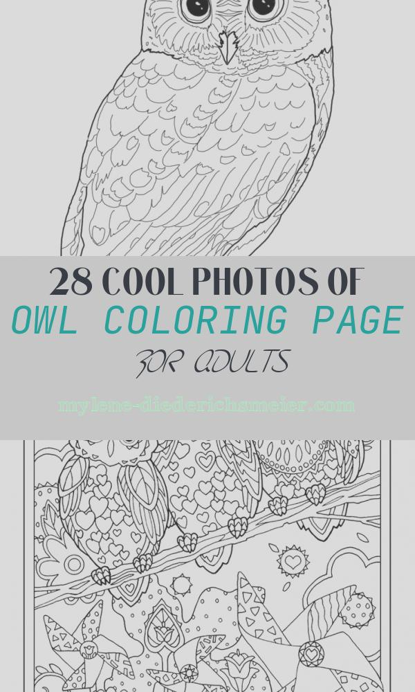 Owl Coloring Page for Adults Elegant Owl Coloring Pages for Adults Free Detailed Owl Coloring