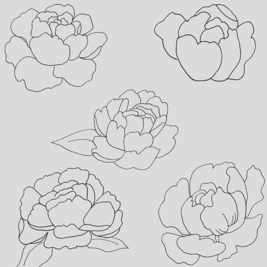peony patterns peony coloring pages