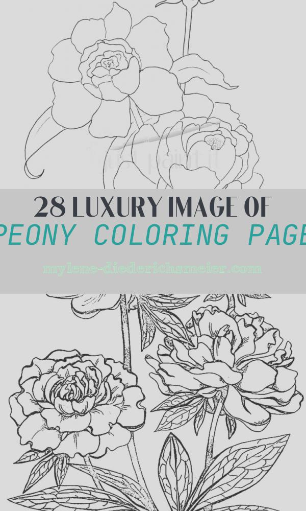 Peony Coloring Page Best Of Hydrangea and Peonies Coloring Pages