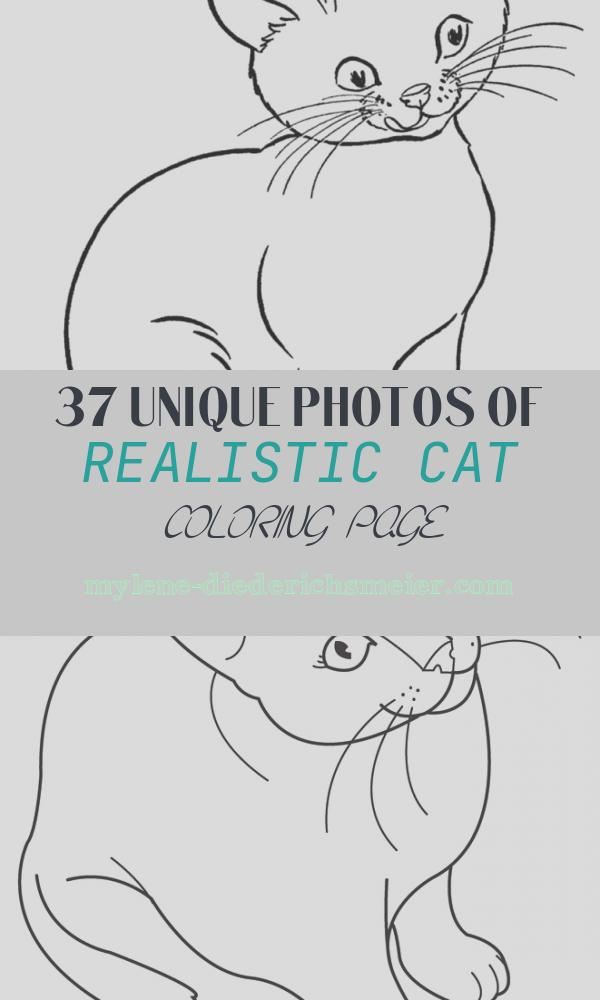 Realistic Cat Coloring Page Beautiful Realistic Coloring Pages Cats