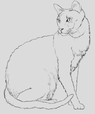 big realistic cat coloring pages sketch templates