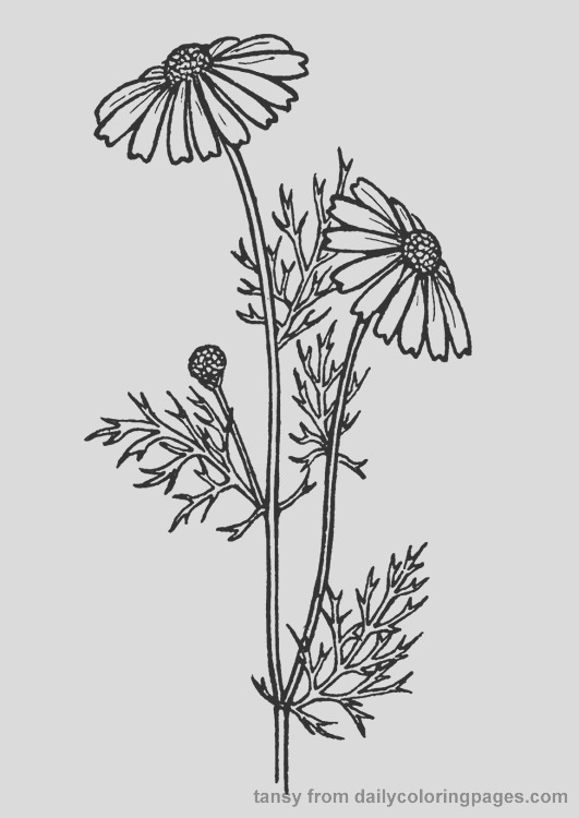 realistic flower coloring pages m=1