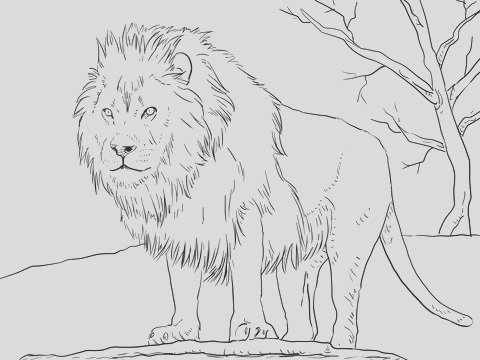 male african lion 2