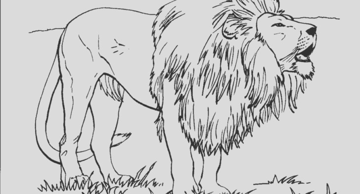 lion realistic drawing