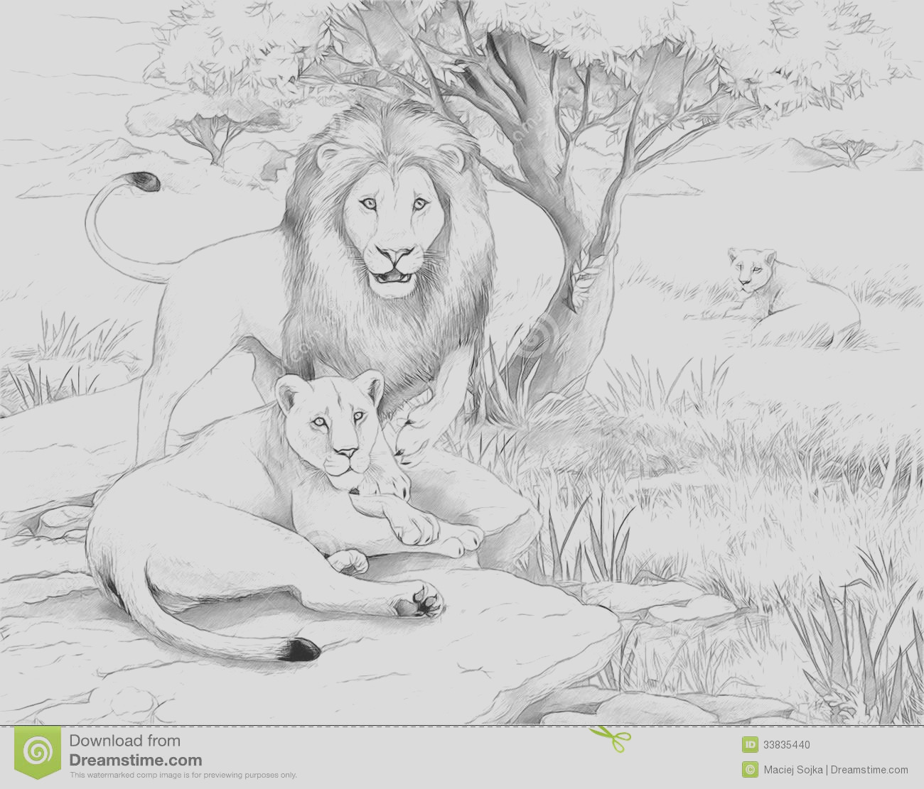 stock photo safari lions coloring page sketch style illustration children image
